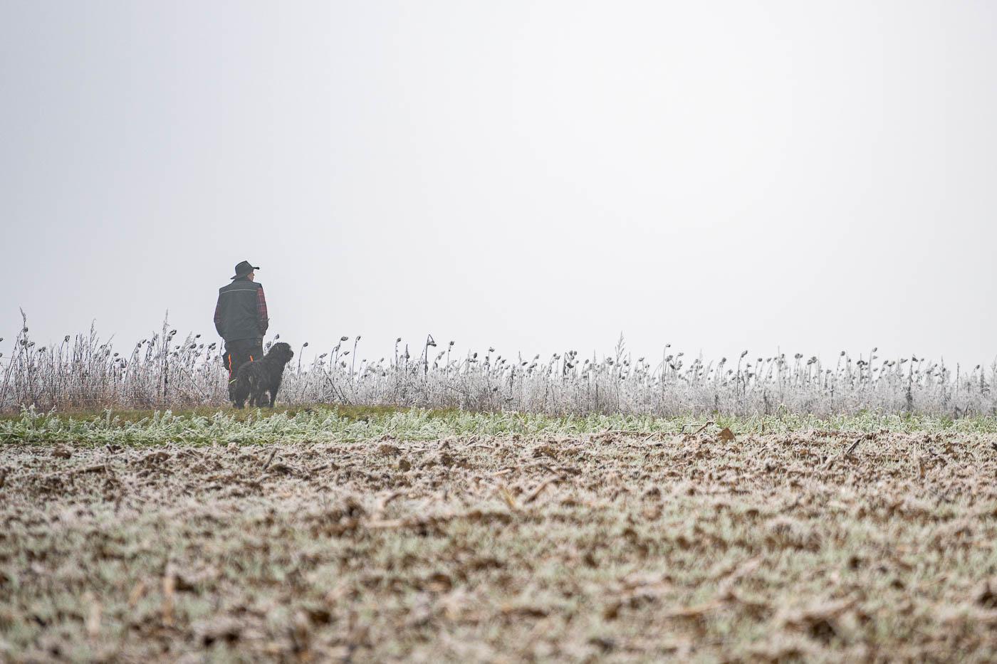 Schäfer auf dem gefrorenen Feld