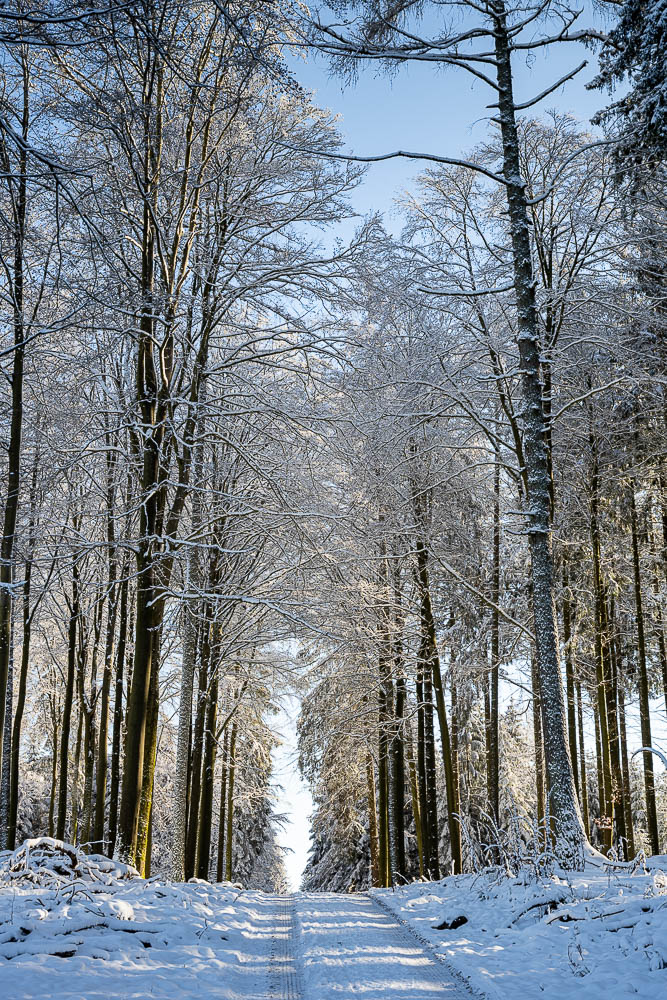 Odenwald bei Waldbrunn